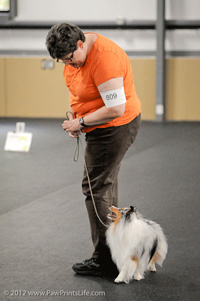 Trust and Respect Needed for Success in Dog Obedience