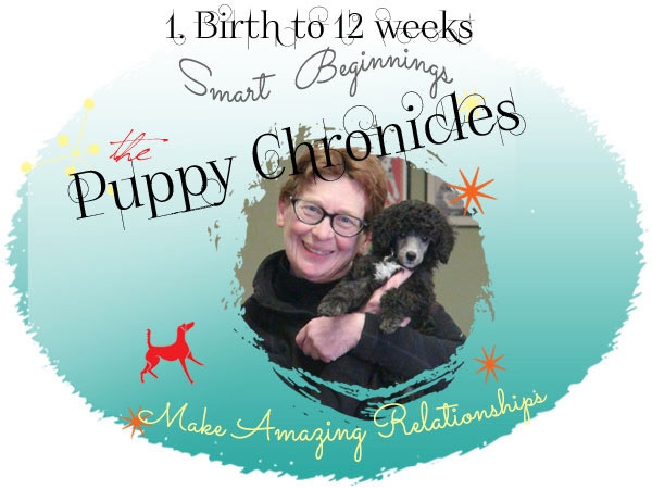 puppy chronicles 1 logo 600x450