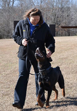 Police, search and rescue dogs - training and handling