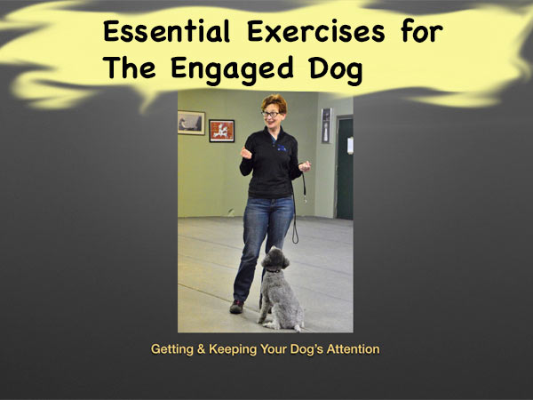 Essential Exercises for the Engaged Dog