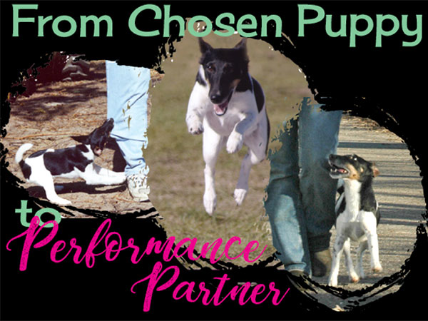 Performance Puppy: From Chosen Puppy to Performance Partner